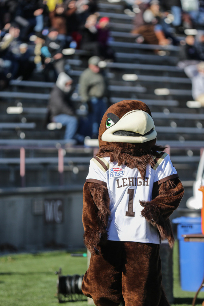 Clutch the Mountain Hawk surveys the football field during the home game against Colgate University on Nov. 15. The mountain hawk became Lehigh's mascot in 1995 and adopted the name Clutch in the early 2000s. (Andrew Garrison/B&W Photo)