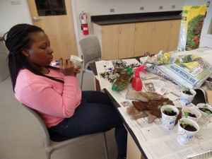 Idowu Olugbade, '18, works on her South Mountain College Investigation course by tending to plants in recycled materials, such as water bottles, in Steps 581 on Friday, March 27, 2015. This course, among others, is in danger of being cut next year. (Kelsey Leck/B&W photo)