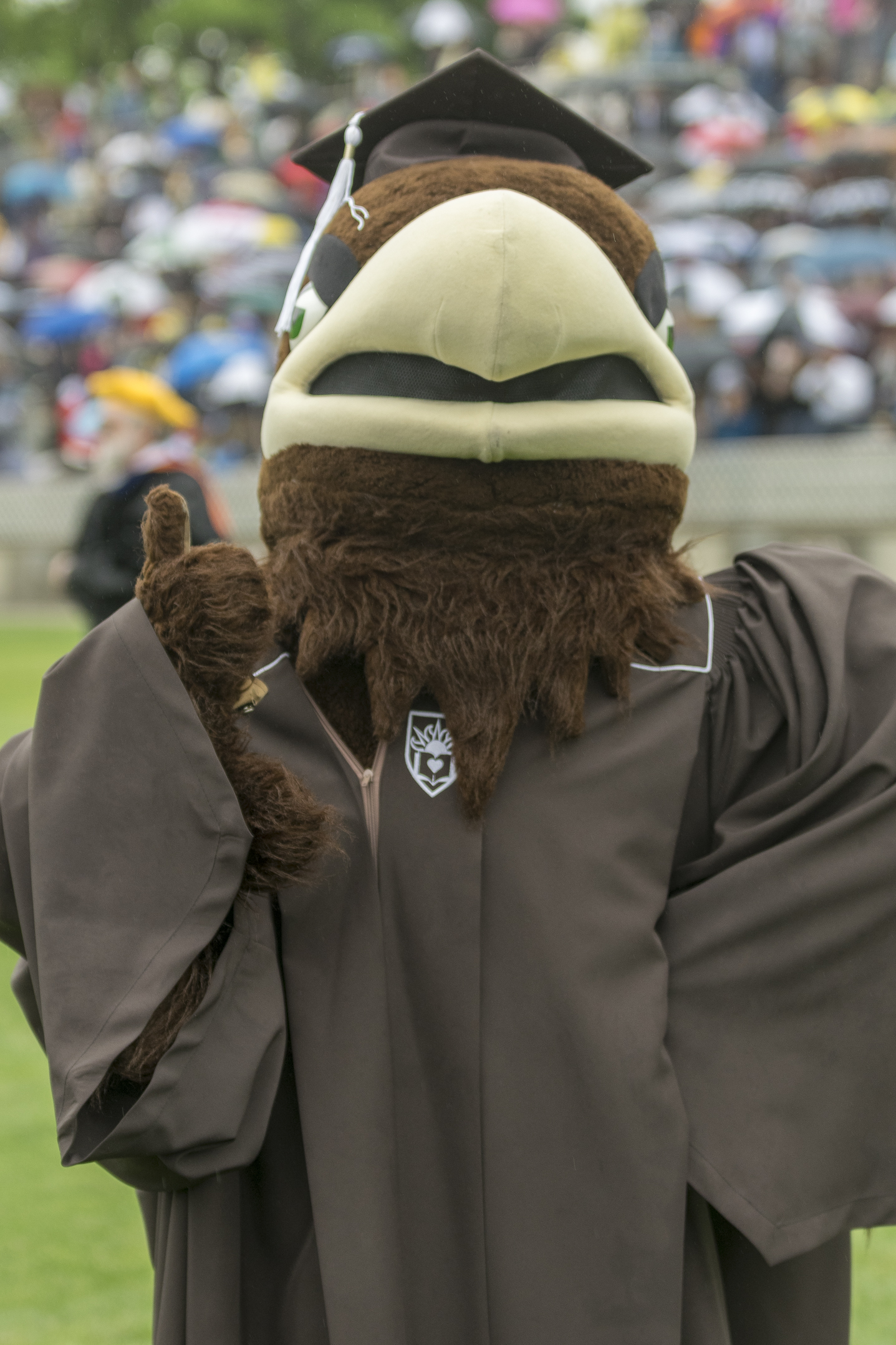 Lehigh's mascot, Clutch, gives a thumbs up during commencement Monday, May 22, 2017, in Goodman Stadium. Like the Lehigh graduates, Clutch received a cap and gown for the big day. (Roshan Giyanani/B&W Staff)