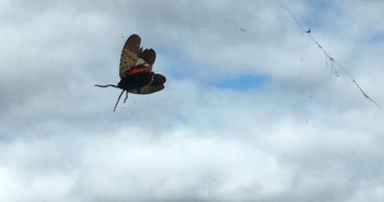 Spotted: Invasive insect finds home at Lehigh